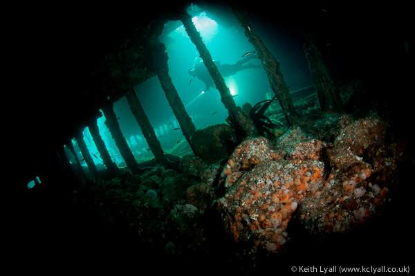 Diver in the Tabarka blockship, Scapa Flow, Orkney Islands, UK