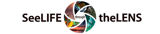 See Life Through The Lens website logo