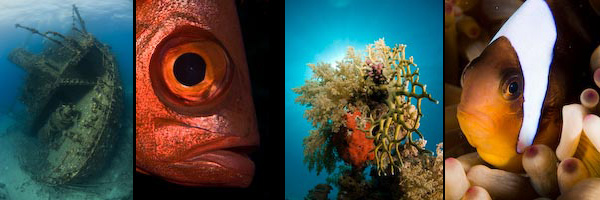 photo montage of marine images